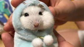 Hamster kafesinin temizliği