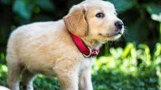 Köpek Bakımı ve Temizliği